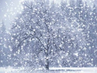 LET IT SNOW, LET IT SNOW, LET IT SNOW… « Paige Luckens blogzine